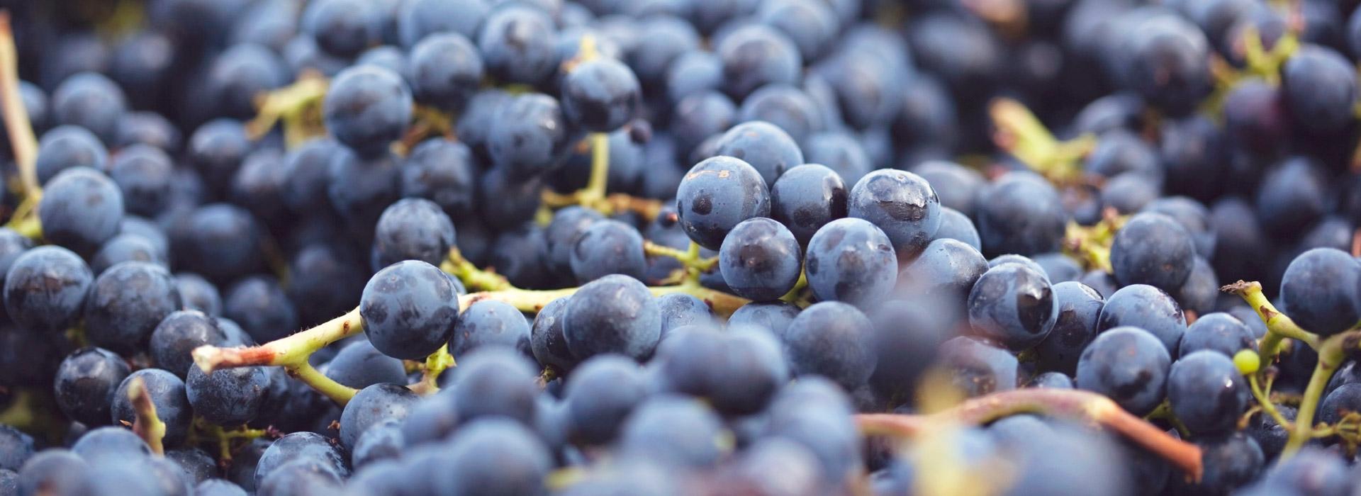Slide2_Grapes_new